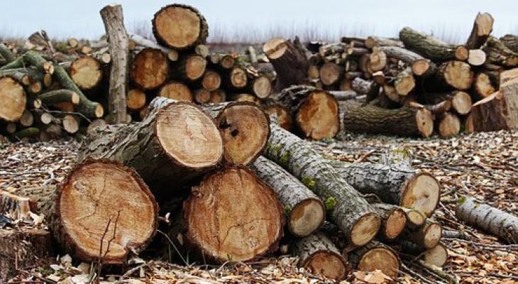 Кировская область лидирует по числу преступлений в лесной сфере
