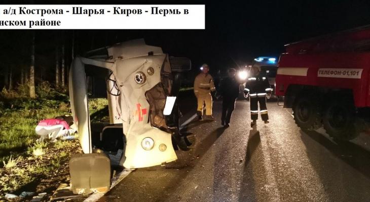 В Кировской области скорая помощь наехала на лося: пострадали 3 человека