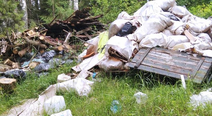 За 9 месяцев в Кирове ликвидировали более 600 несанкционированных свалок