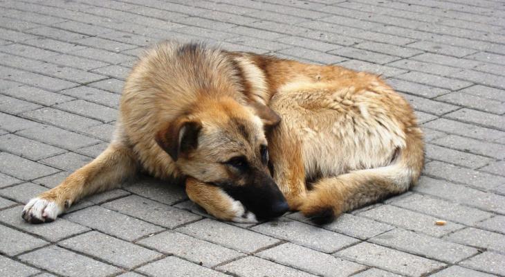 Впервые в России на приюты для животных выделят федеральные средства