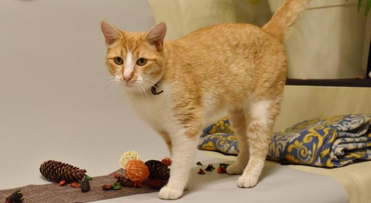 В России ученые впервые обследовали домашнего кота с коронавирусом