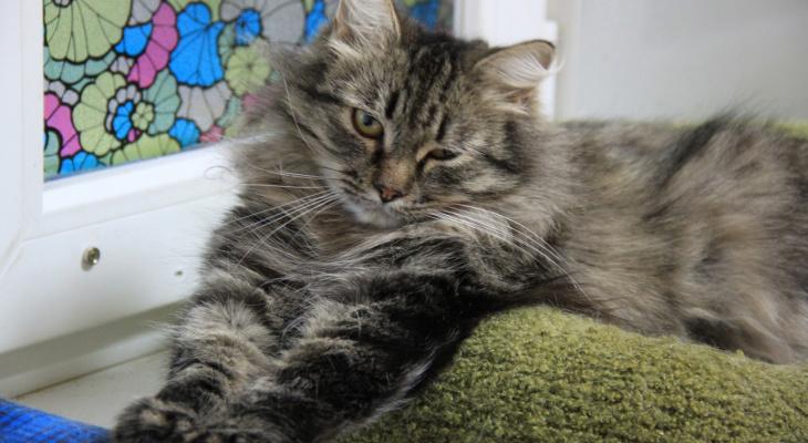 В Кирове бездомные животные нуждаются в помощи и человеческом тепле