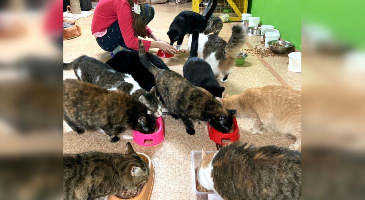 «Когда кошек стало много, сняла им отдельное жилье»: Елена Волкомурова о работе с животными
