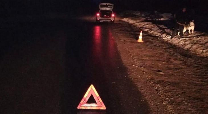 В Кировской области женщина выгуливала собаку из движущегося авто и устроила ДТП