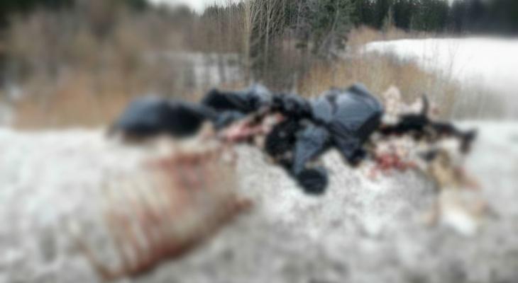 В Кирове у Нового моста горожане нашли окровавленные останки скота