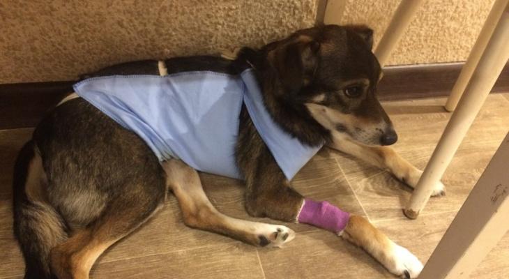 Возбуждено уголовное дело после смерти собаки Честера из-за иголок в мясе
