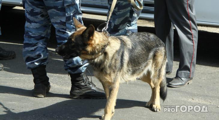 В Кировской области ищут новых владельцев для служебных собак