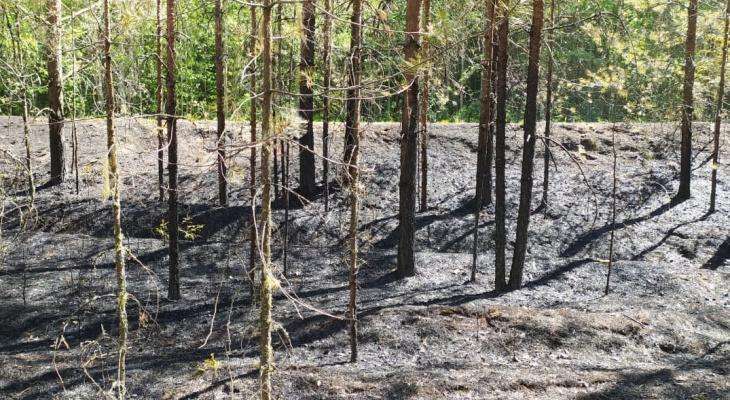 В Кировской области рыбаки устроили лесной пожар