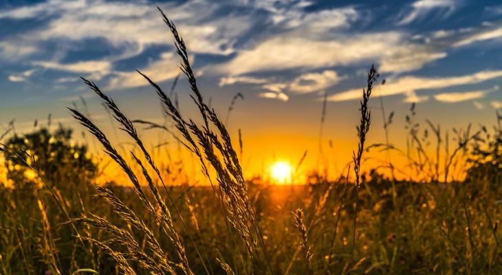 Засушливость и пожароопасность: прогноз погоды на неделю в Кировской области