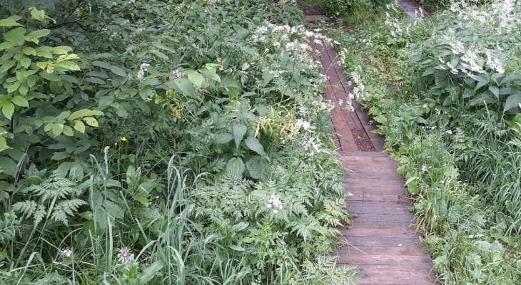 В Кирове полицейские обнаружили в кустах необычную находку