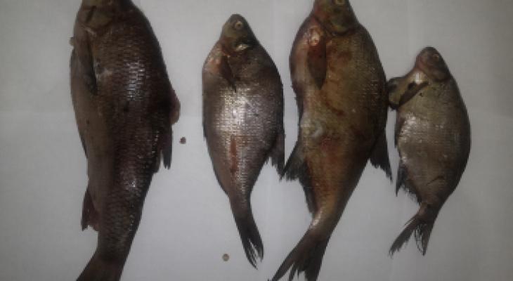 В Кировской области за браконьерство будут судить двух рыбаков