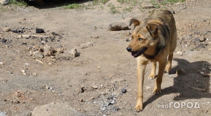 Жители Кировской области просят защитить их от собаки, которая кусает людей