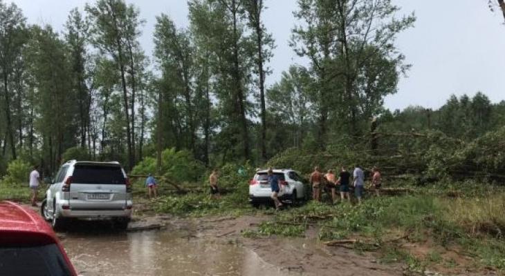 В Кировской области десятки машин оказались в западне из поваленных деревьев
