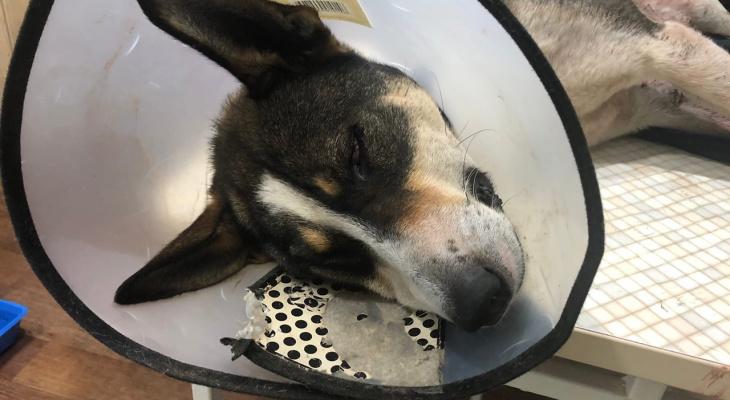 Стреляют, избивают, душат: в Яранске участились случаи жестокого отношения к животным