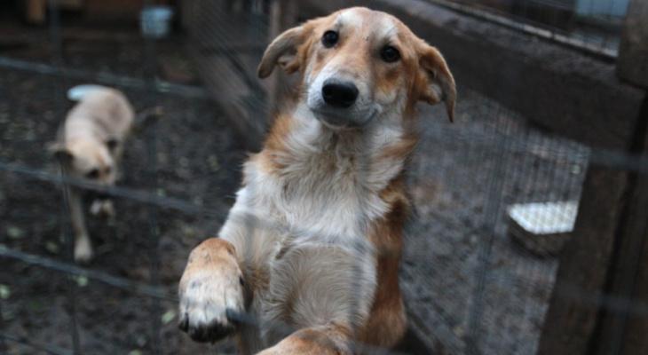 «Дай лапу, друг!»: поможем бездомным животным вместе