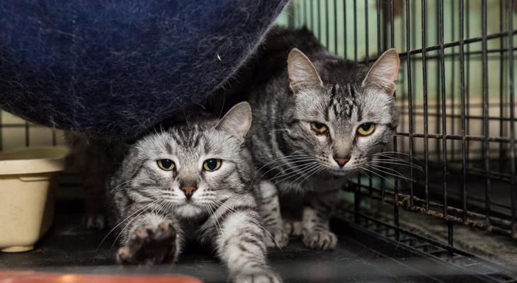 В России хотят ввести запрет на продажу животных в зоомагазинах