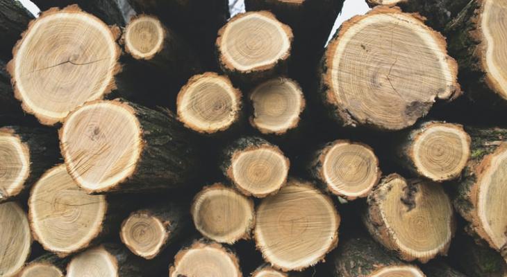 Из Кировской области в Китай вывозят лес, рапсовое масло и березовую чагу