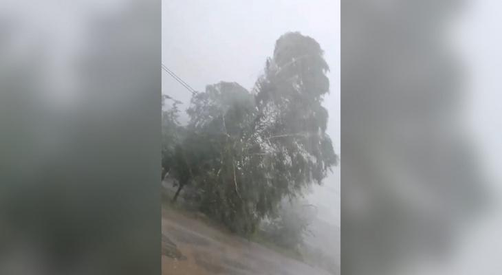 В Нолинске ураган снес теплицы и крыши домов: фото и видео