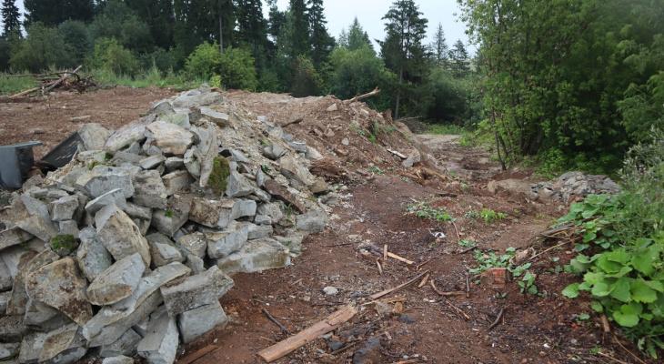 В Кирове начали восстанавливать лес, который был залит бетоном