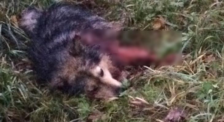 В Кировской области мужчина жестоко убил собаку