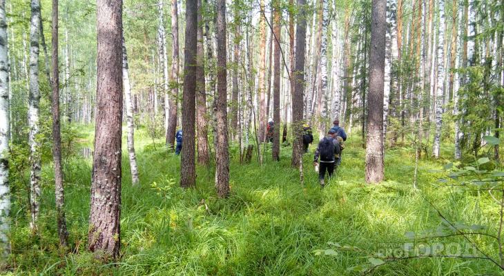 Кировские пенсионеры ушли в лес за грибами и пропали