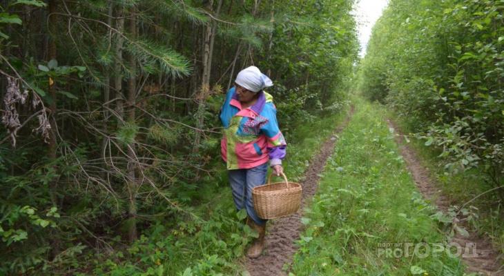 В лесах Кировской области пропали две пенсионерки
