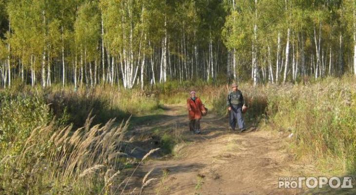 В Кировской области в лесу заблудились два грибника