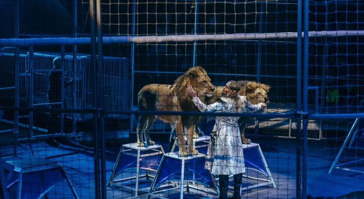 По всей России вводят QR-коды: успейте попасть на цирковое шоу без прививки