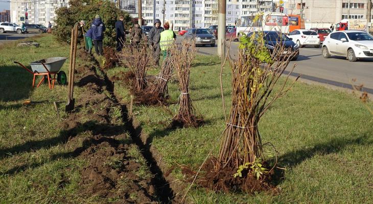 В Кирове у дорог появятся кустарники вместо заборов