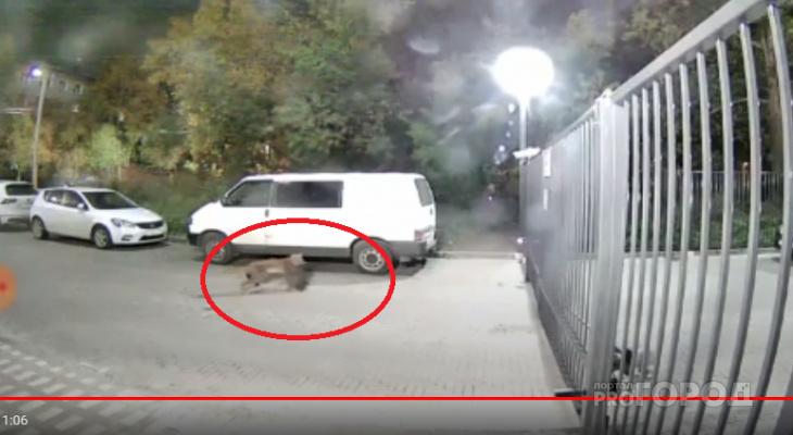«У подъезда высотки рысь загрызла кошку»: кировчане о ЧП у парка Победы