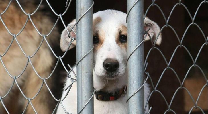 Прокуратура призвала кировские власти соблюдать закон об ответственном обращении с животными