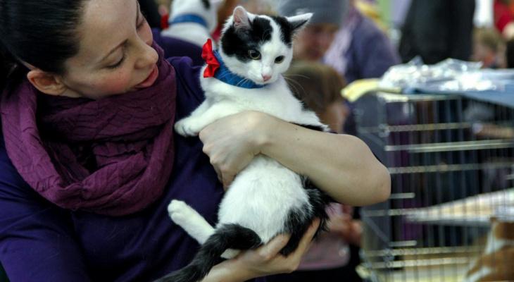 В Кирове пройдет бесплатная вакцинация домашних животных