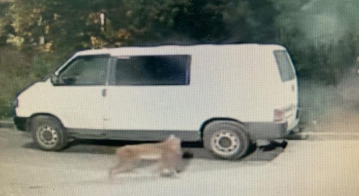 «Не исключено, что эта рысь — сбежавшее прирученное животное»: в правительстве об инциденте у парка Победы